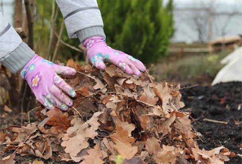 Уборка сада от листвы