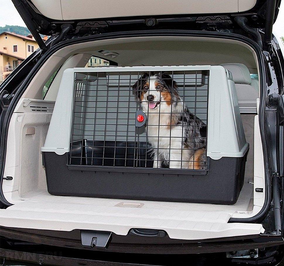Собака в кузове