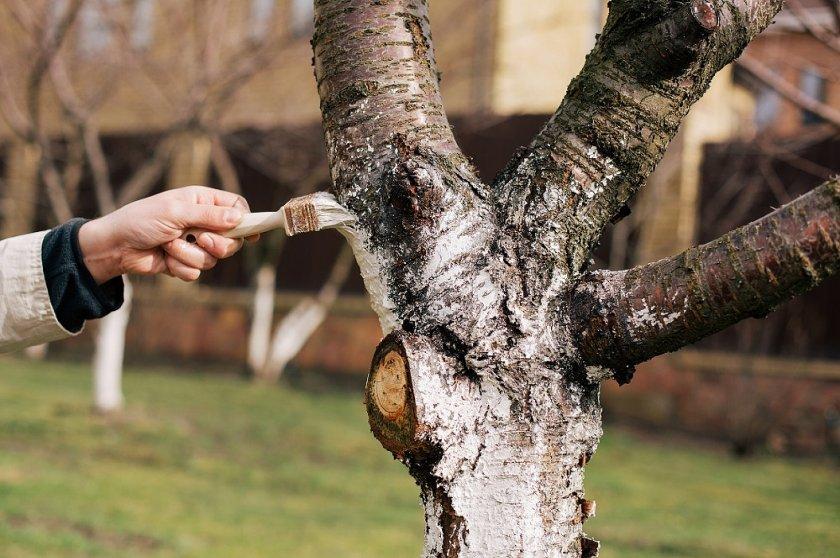 Очистка дерева