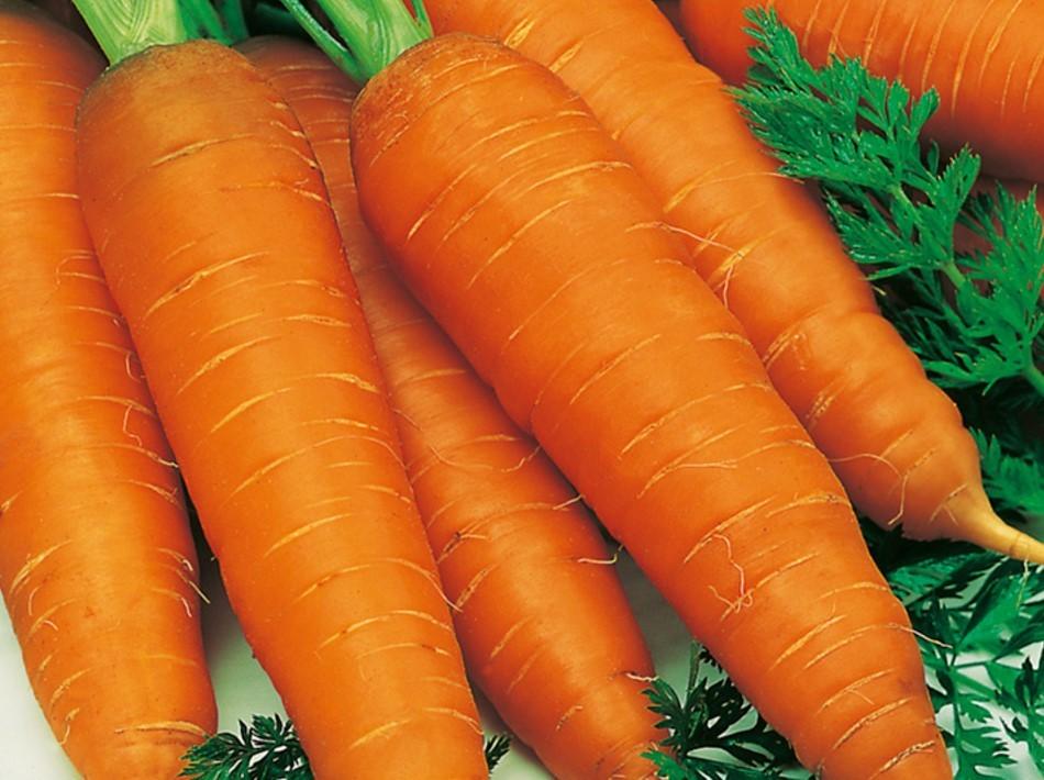 Нормальная морковь